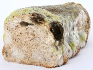 Moldy Insulation Can Cause Health Issues